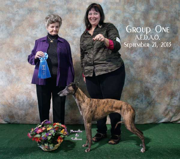 Chai getting United Kennel Club Best in Hound Group at 9 years old.